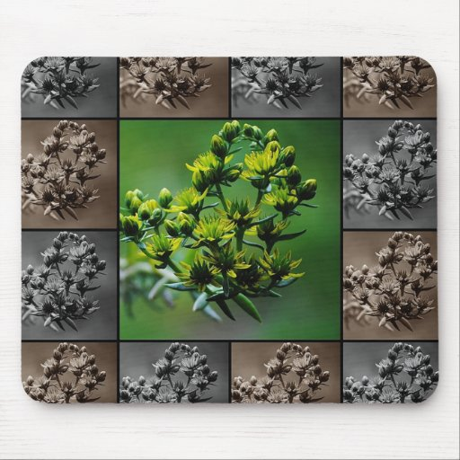 Sedium Yellow Flower Collage Mousepad