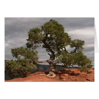 Sedona Vortex Tree card