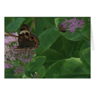Sedum, Butterfly & Bee Card