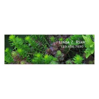 Sedum Ground cover Business Card