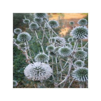 Seed Head Of Leek Flower Allium Sphaerocephalon Canvas Print