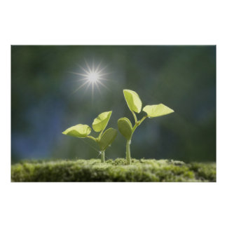 Seedlings, close up, lens flare poster