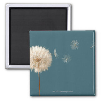 Seeds blowing off wishing weed magnet