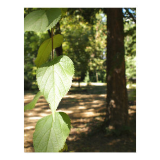 Selective focus on a young branch of a tree with l customized letterhead