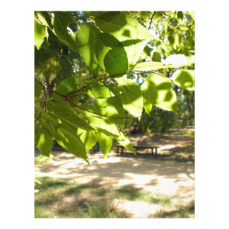Selective focus on a young branch of a tree with l personalized letterhead