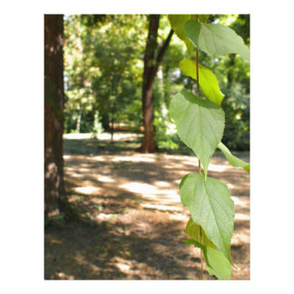 Selective focus on a young branch of a tree with l letterhead template