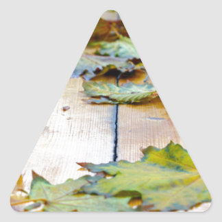 Selective focus on the autumn fallen maple leaves triangle sticker