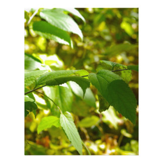 Selective focus on the branch of a tree closeup custom letterhead