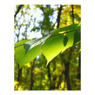 Selective focus on the branch of a tree with large custom letterhead