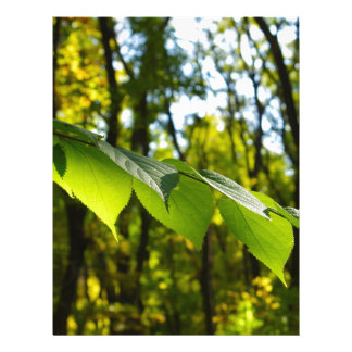Selective focus on the branch of a tree with large personalized letterhead