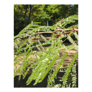 Selective focus on the young acacia branch with le customized letterhead