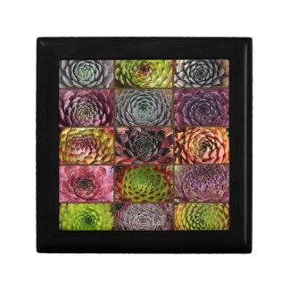 Sempervivum - Houseleek - Hauswurz - Collage Gift Box