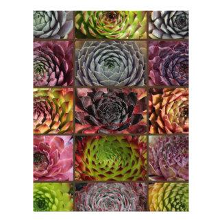 Sempervivum - Houseleek - Hauswurz - Collage Letterhead