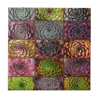 Sempervivum - Houseleek - Hauswurz - Collage Tile