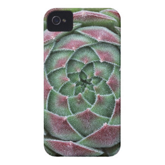Sempervivum Ohio Burgundy Case-Mate iPhone 4 Cases