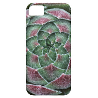 Sempervivum Ohio Burgundy iPhone 5 Covers