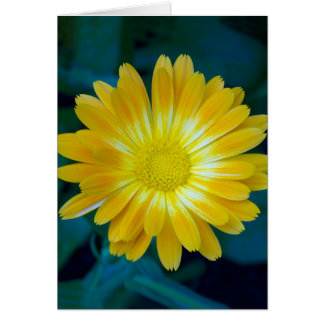 Send Flower to your friends that lasts. Card