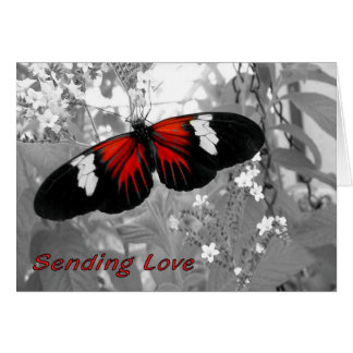 Sending Love Card via Carrier Butterfly