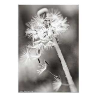Sending Out Wishes Photographic Print