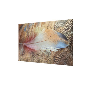Senegal Bustard Feather Close Up Canvas Print