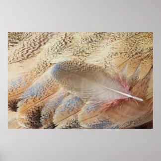 Senegal Bustard Feather Still Life Poster