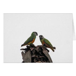 Senegal Parrots Card