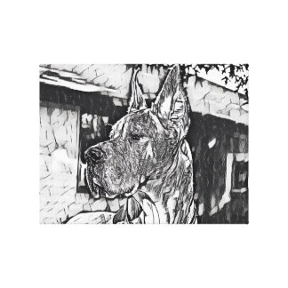 Senior Dane in B&W Canvas Print