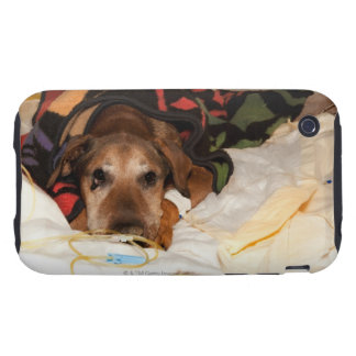 senior dog in the intensive care unit with a iPhone 3 tough covers