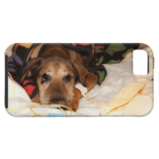 senior dog in the intensive care unit with a iPhone 5 cover