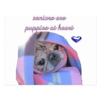 senior pug postcard