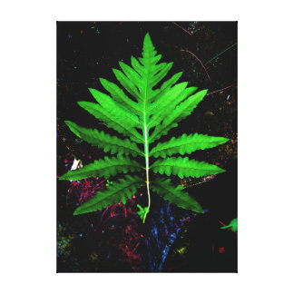 Sensitive Fern Canvas Print