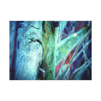 Sepes Stipes Frigus Canvas Print
