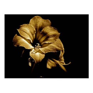 SEPIA AMARYLLIS WITH BLACK BACKGROUND POSTCARD