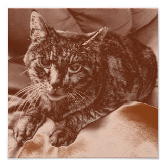 Sepia/Brown Coloration Cat Poster