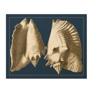 Sepia Conch Seashells Wood Wall Art