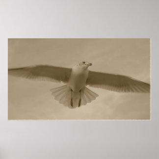 Sepia Gull Poster