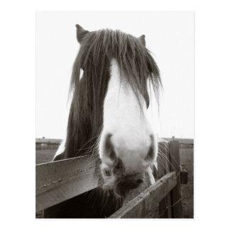 Sepia Horse Portrait Postcard