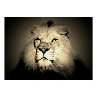 Sepia Lion - Wild Animal Old Fashioned Photography Poster