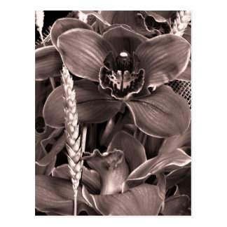 Sepia Orchids And Spikes Postcard