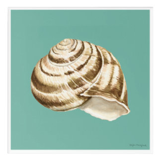 Sepia Striped Shell on Teal Acrylic Wall Art