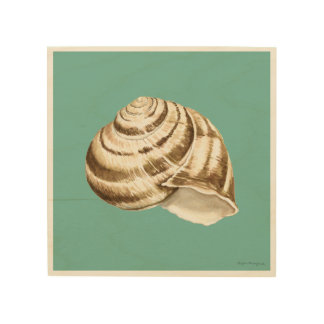 Sepia Striped Shell on Teal Wood Print