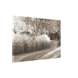 Sepia Tone Early Autumn Walking Path Canvas Art Gallery Wrapped Canvas