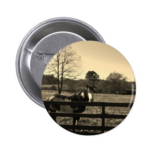 Sepia Tone  Photo of  brown  and white Horse Pins