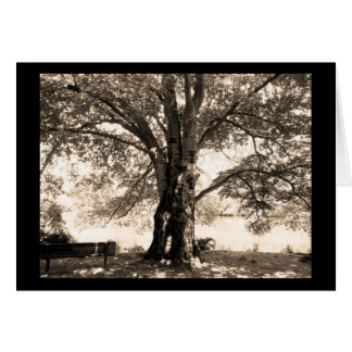 Sepia Tree Greeting Card
