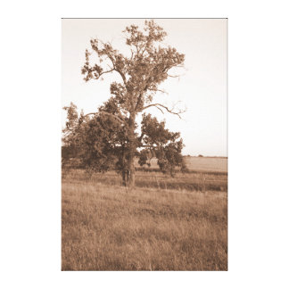 Sepia Tree I Canvas Print