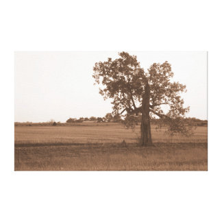 Sepia Tree II Canvas Print