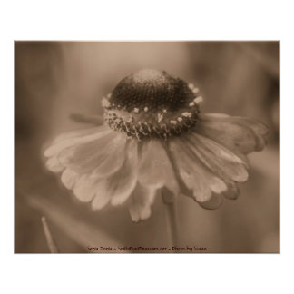 Sepia Zinnia Flower Photography Poster Print