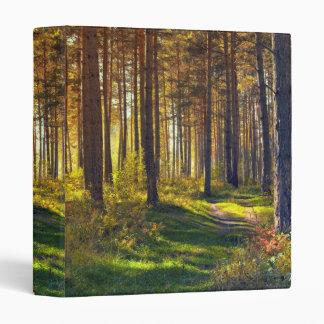 September in the forest.Sunrise in autumn forest Binders