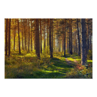 September in the forest.Sunrise in autumn forest Poster