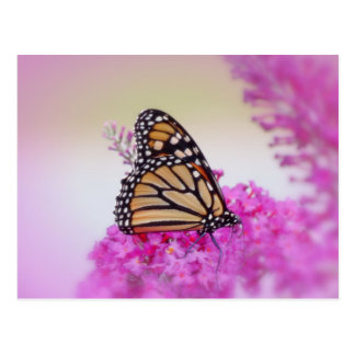 September Monarch Butterfly Postcard
